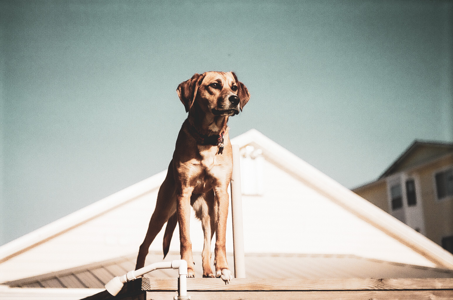 The Ethics of Releasing Your Pet into the Wild